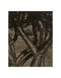 Dancing Trees  1922