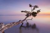 Water Tree XV