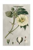 Tropical Varieties II
