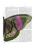 Butterfly in Green and Pink B