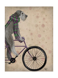 Schnauzer on Bicycle  Grey