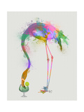 Rainbow Splash Flamingo 3