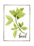 Watercolor Herbs I Reproduction d'art par Grace Popp