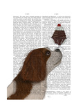 Cavalier King Charles  Brown White  Ice Cream