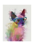 Rainbow Splash Cat 2