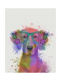 Rainbow Splash Weimaraner  Portrait