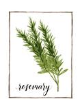 Watercolor Herbs V Reproduction d'art par Grace Popp