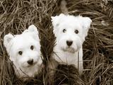 Such Cuties