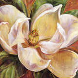 Magnolia Glow I