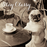 Cafe Pug Stay Classy