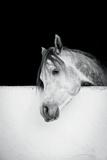 Lonesome Gray