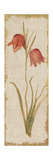 Red Tulip Panel on White Vintage