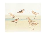 Watercolor Sandpipers II