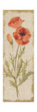 Poppy Panel on White Vintage