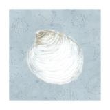 Serene Shells II