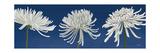 Morning Chrysanthemums V Indigo