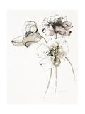 Three Somniferums Poppies Neutral