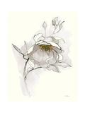 Carols Roses V Off White