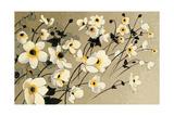 Anemones Japonaises Blancs