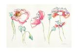 Pink Somniferums Bright