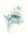 Carols Roses V Blue