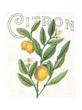 Classic Citrus V
