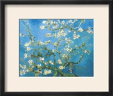 Branches of an Almond Tree in Bloom  1890