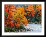 Rivière dans les bois en automne Reproduction encadrée