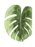 Palm Green I Reproduction d'art par PI Studio