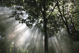 Crescendo of Light