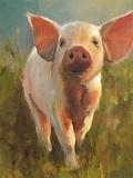 Morning Pig