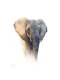 Elephant Watercolor
