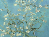 Almond Blossoms, 1890 Reproduction d'art par Vincent Van Gogh