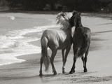 Young Mustangs on Beach