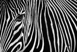 Zebra in Lisbon Zoo Papier Photo par Andy Mumford