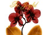 Joyful Orchid