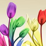 Floral Splurge 2