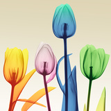 Floral Splurge 1