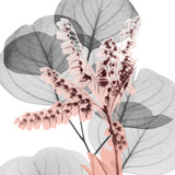 Eucalyptus Blush 1
