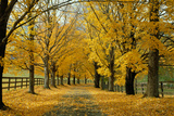 Autumn Trees near Waynesboro Virginia USA