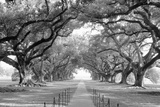 USA  Louisiana  New Orleans  brick path through alley of oak trees