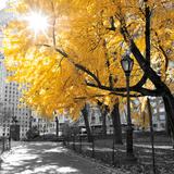 Park Pretty II Papier Photo par Assaf Frank
