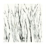 Birches I