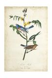 Delicate Bird and Botanical IV