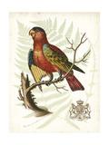 Regal Parrots II