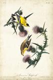 American Goldfinch Reproduction d'art par John James Audubon