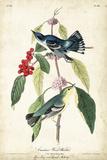 Cerulean Wood Warbler Reproduction d'art par John James Audubon