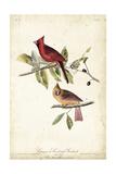 Common Cardinal Grosbeak Reproduction d'art par John James Audubon