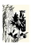 Translucent Wildflowers X Giclée premium par Jennifer Goldberger