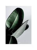 Greenish Reproduction d'art par PhotoINC Studio